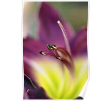 Day Lilly Poster
