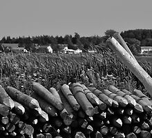 Weathered Fence Posts by Craig Blanchard