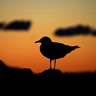 Seagull at Sunset by splitsie