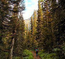 Forest near St. Mary Falls - Glacier National Park, Montana, USA by Dave Martsolf