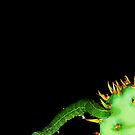 Catus_Caterpillar by Chip  Ford