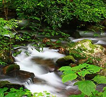 HIDDEN MOUNTAIN STREAM by Chuck Wickham