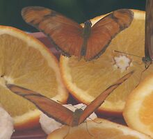 butterfies on a orange by mgray