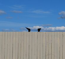 Crows by AylaM