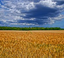 Summer Stormy Fields Norfolk UK by Mark Snelling