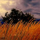 Grasses  Blowing In the wind  by Rick  Todaro