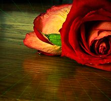 The Rose in Lomo by WiredMarys