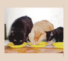 three cats together by Rosa  D'Alessio