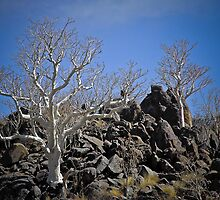 White Trees on Black Rocks by Saka