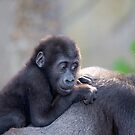 Baby Gorilla by PPV247