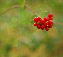 berries  by mariapar