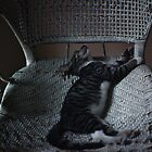 Store Cat in Wicker Chair by Jay Gross
