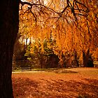 Bright and Beechworth, Victoria, Australia by Elana Bailey