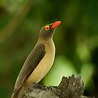 Bird - Oxpecker by Corien