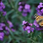 Butterfly Field by Nick Carter