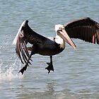 Pelican and Friend by Barry Goble