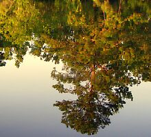 Reflection In Still Waters by DottieDees