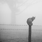 The Cat by John Burtoft