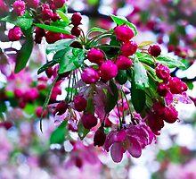 Spring by AnnabelHC