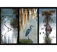 Cypress Island Trio Photographic Print