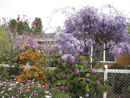 Garden down the road at Toowoomba,Qld.Australia by Marilyn Baldey