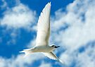 Angel in Flight II - Cocos (Keeling) Islands by Karen Willshaw