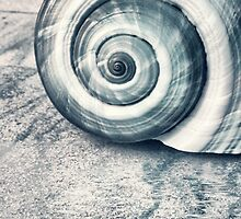 Shell by PhotoDream Art