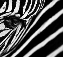wild hypnosis II by gompo