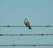 Bird on a Wire by Mike Oxley