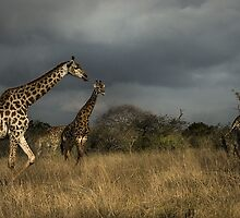 Spires of Hluhluwe by David Lawrence