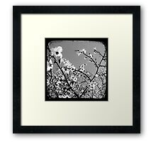 Plum Blossoms Through The Viewfinder (TTV) Framed Print