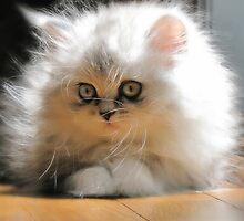 Daydream Kitten by Julie Everhart