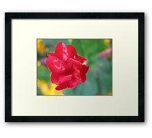 Shouting petals Framed Print