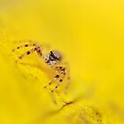 Sunny Spider by beeater