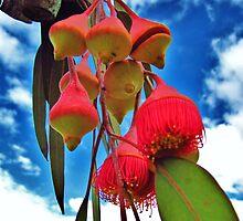 Eucalyptus by dozzam