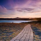 Moonee path  by Michael Howard