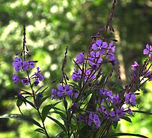 Purple Wildflowers by Craig Blanchard