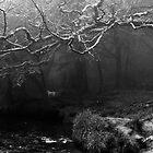 Golitha Falls by John Burtoft