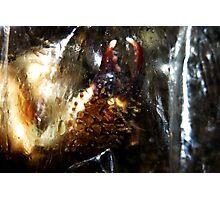 Chela di Pelosa Photographic Print