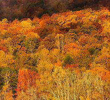 Autumn Slope - Chattanooga, Tennessee by Alex Zuccarelli