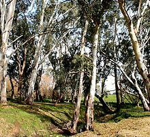 White Gums V by Stephen Mitchell