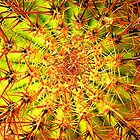 Eye of the Cactus by AvaMeLiA