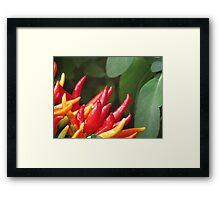 Chilli Peppers Framed Print
