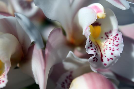 Orchid Abstract by yolanda