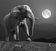 MOONRISE WITH ELEPHANT by Michael Sheridan