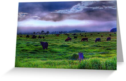 How Now Blue Cow  - Kangaroo Valley - The HDR Experience by Philip Johnson