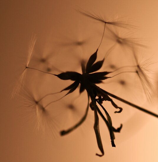 ~go fly a kite~ by Jen Wahl