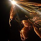 Fireworks Pheonix by Tam Edey