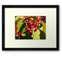 Berries in the Forest... Framed Print