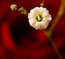 Precious too by Arek Rainczuk
